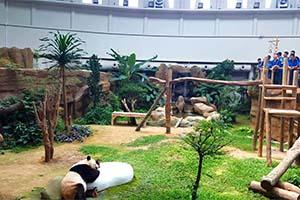 FFEKuala Lumpur Zoo